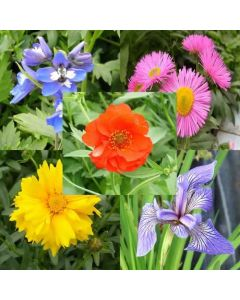 Varieties shown in the image are for demonstration.