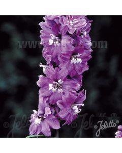 DELPHINIUM Lilac Rose