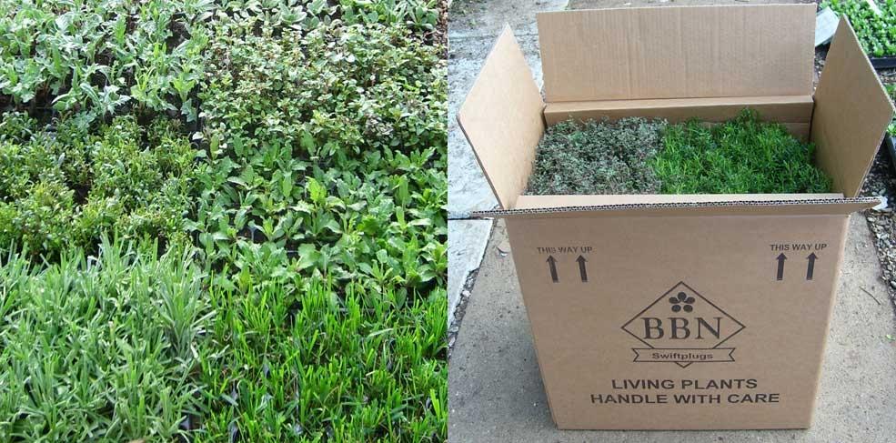 Plants & Box