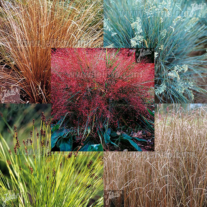 Grass Plug Plants